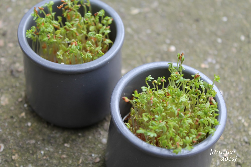 cress_pots_3_w_sign